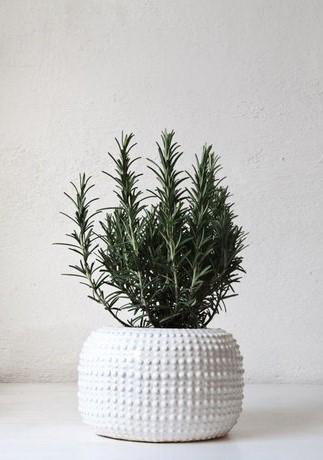 a-plant-2