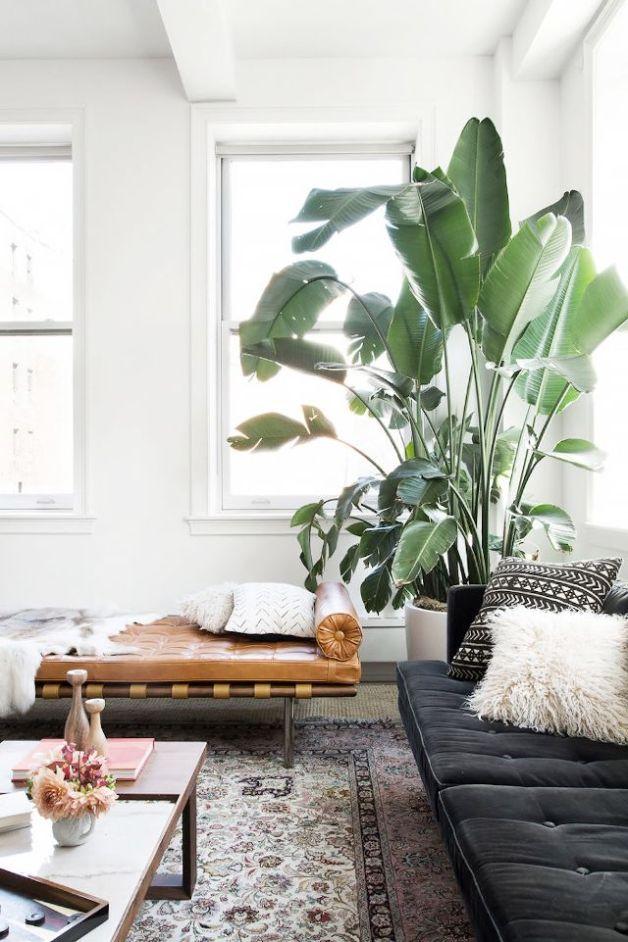 easy_indoor_outdoor_plants1