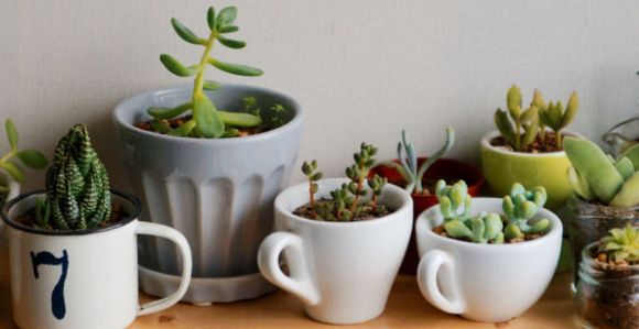 gallery-1459533118-succulents-in-mugs
